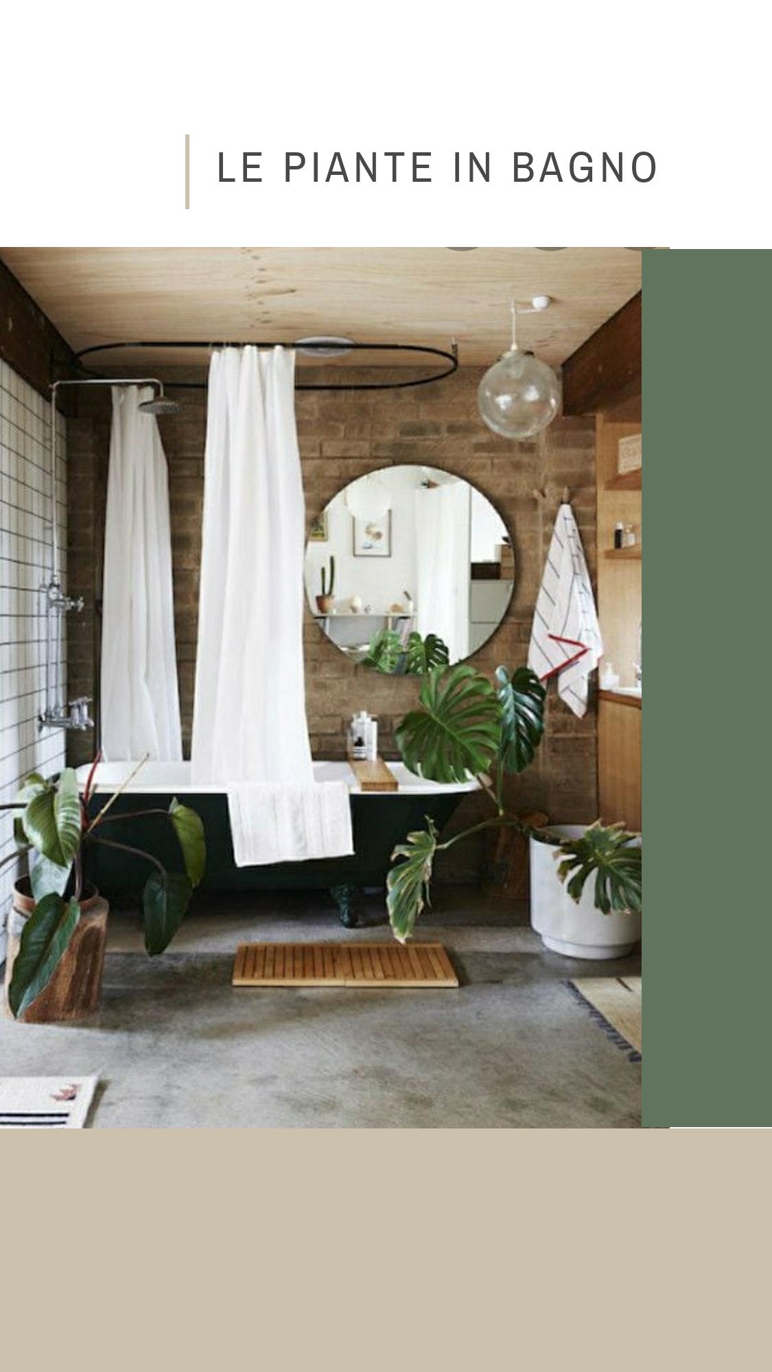 Come Far Morire Una Pianta le piante in bagno - giorgio gravina architetto